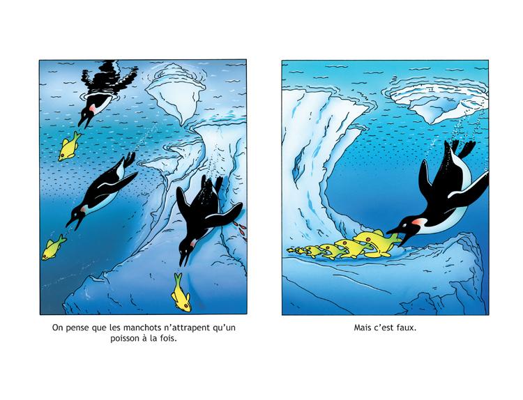 Extrait 3 : Les Manchots sont de sacrés pingouins !