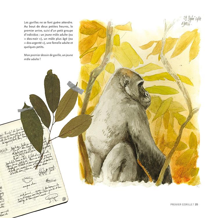 Extrait 3 : Des Gorilles et des hommes : [Carnet de voyage] naturaliste au Congo Brazzaville